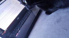 Moi c'est Rhéa. Je suis le chat de la fille qui vous parle d'abitude. Vivre avec des humains, ce n'est pas de tout repos. Je vous raconte mon calvaire !