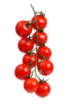 Tomatoes Gardening With Containers How to Grow Cherry Tomatoes. You'll need 2 or 3 months of warm (even hot) weather for your tomato plants to thrive if you start them as seeds in the garden.