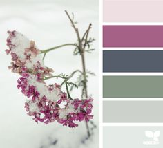 design seeds: winter flora