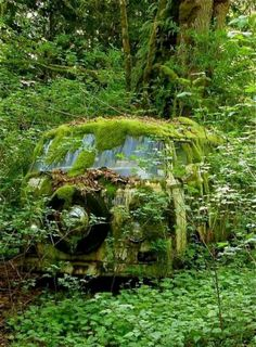 VW Van to cool to come across this in the forest.  Oh no so sad!