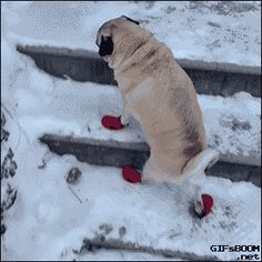 This dog who has not quite gotten the hang of his new boots. | Community Post: 21 Super Cute Dogs Who Are Embracing This Never-Ending Winter
