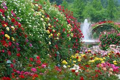 Rose Garden with a Waterfall nature flowers waterfall roses garden Photo Tours, Cottage Garden Borders, Ronsard Rose, The Secret Garden, Coming Up Roses, Landscaping Software, Arte Floral, Parcs, Flowers Garden