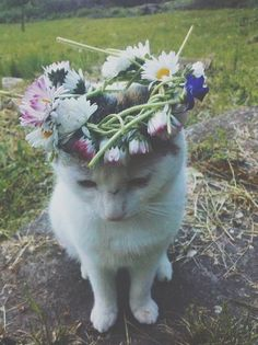 aesthetic, animal, cat, flowers, grunge, hipster, indie, kitty, nature, pale, pastel, pretty, soft grunge, tumblr