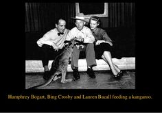 0 humphrey bogart, bing crosby and lauren bacall feeding a kangaroo