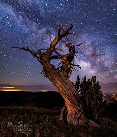 Stars over bristlecone pine (Colorado) by David Soldano on 500px