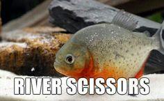 RIVER SCISSORS