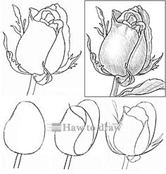 how to draw a rose with pencil 13 Flower Art Drawing, Flower Line Drawings, Flower Drawing Tutorials, Flower Sketches, Floral Drawing, Pencil Art Drawings, Art Drawings Sketches, Easy Drawings, Art Tutorials