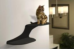 Check out these gorgeous modern styled cat wall shelves. They look great and keep your cats happy and entertained!