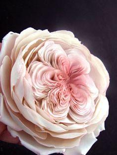 sugar art studio-sugarartstudio-giovanna smith-Sugar Flower-Sugar flowers-Flower sugar-flowers-sugar flowers