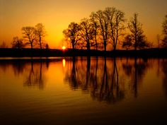Image result for sunset with trees