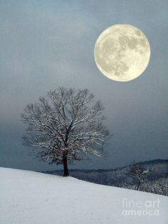 Winters Moon Photograph by Laurinda Bowling