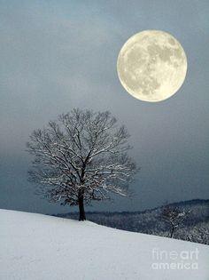 Winters Moon Photograph