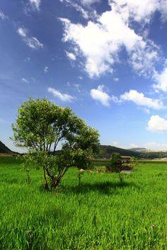 Beihai Wetland, Tengchong (650 km from Kunming), W Yunnan