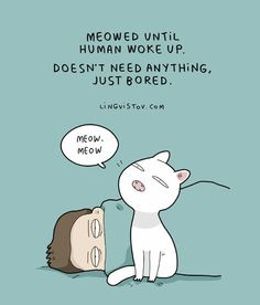 10 Adorable Cat Comics From A Russian Artist That Are Totally Accurate - Funny Cat Quotes I Love Cats, Cute Cats, Funny Cats, Funny Animals, Crazy Cat Lady, Crazy Cats, Funny Illustration, Illustrations, Kitten Baby
