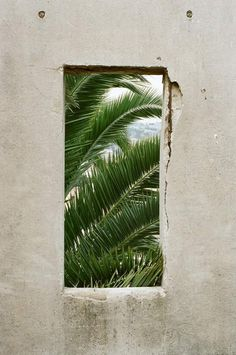 snowy window through to green tropical plants Eleven Paris, Palm Trees, Palm Tree Print, Greenery, Plant Leaves, Tree Leaves, Art Photography, Framing Photography, Decoration