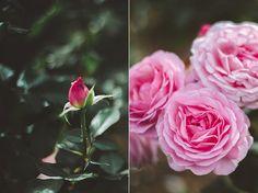 Melbourne Day 5 (Victoria State Rose Garden)