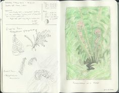 14 March 2012 - A meditative exercise on a rainy day - drawing ferns, fronds and fiddleheads.