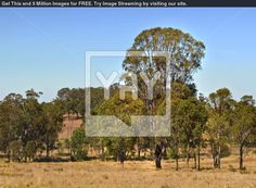 Royalty Free Image of Australian Countryside Gum Trees And Blue Sky