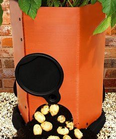 Growing Potatoes In Containers - How to Plant Potatoes In Pots