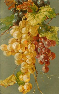 Grapes on vine by C. Klein