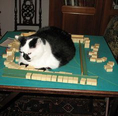 I so miss Shao Fang, Madlyn, Gail and Marie! And Mah Jongg. Cute Cats And Kittens, Pet Cats, Pets, Great Gatsby Fashion, Cat 2, White Cats, Mahjong Table, Board Games, Gatsby Style