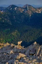 7 Day Hikes in the Swan Range | Distinctly Montana Magazine Seeley Lake, Leeward Side, Echo Lake, Park Around, Forest Road, Swan Lake, Day Hike, Wilderness, Montana