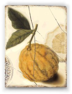 """Sid Dickens- Lemon - """"Sacred to the gods, this fruit with skin of gold. Divine symbol of immortality and a new Golden Age."""" I finally aquired this tile - so excited!"""