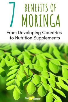 Bitter. That's the best word I can use to describe moringa, the seeds of which I tried in Uganda.Despite its strong taste, moringa is quickly becoming a popular nutrition supplement in the U.S. All parts of the moringa tree — including the seeds, pods and leaves — have long been used in other parts of the world for their nutritional properties. This article looks at what moringa is and some of its most beneficial uses, including disease prevention and even water purification#he