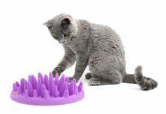 Northmate Interactive Slow Pet Feeder    http://www.amazon.com/gp/product/B00EB4IV2A/ref=as_li_ss_tl?ie=UTF8&camp=1789&creative=390957&creativeASIN=B00EB4IV2A&linkCode=as2&tag=floppycatscom-20