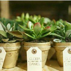 Cactus y suculentas para los invitados ~ Verdnatura