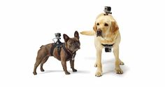 GoPro Debuts Its First Dedicated Dog Mount