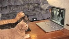 Engineers are usually portrayed as people who only care about machines and don�t have time for their emotions. However in this amusing video we can see their sensitive side. These engineers enjoy their cats� company. They eat together, sleep together and even work together!