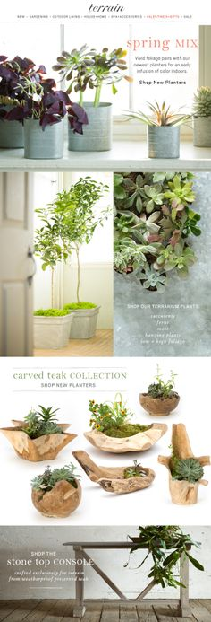 Sneak Peek: The first new planters to arrive for spring.