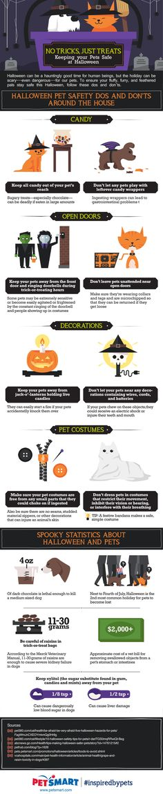Tips to Keep Your Pets Safe This Halloween - TIPS�GRAPHIC