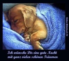 From when good night story Good Night Story, Good Night Wishes, Get Well Soon Quotes, Animals And Pets, Dachshund, Good Morning, Labrador, Humor, Dogs
