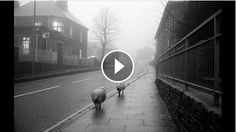 The final 'Celebrating 60 Years of Leica M' series video, with the brilliant Peter Marlow (photographer) of Magnum Photos: http://vimeo.com/115962076  Celebrating 60 Years of the legendary Leica M with Photographer Peter Marlow To mark this anniversary we asked 10 photographers to tell us about their experiences using M, their favourite image captured with it, and what this iconic camera means to them.   Learn more about capturing your M image at uk.leica-camera.com #LeicaM60