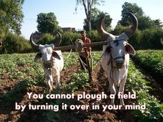 You cannot plough a field by turning it over in your mind. ~ Author Unknown Take a lesson from the ants, you lazybones. Learn from their ways and become wise! Proverb 6:6