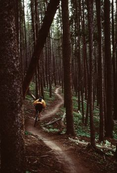 Biking through the woods - plans for the weekend