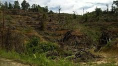 "Unrestricted land clearing Irresponsible waste disposals ""When I was young, after it rained, my house would be swarmed by mil. Our Environment, Borneo, Travel And Leisure, Homesteading, My House, Vineyard, Country Roads, Outdoor"