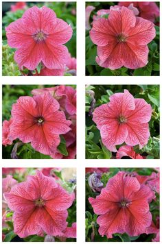 """""""All Edunias featured in the photographs are genetically identical clones. Nevertheless, they all look quite different. The """"Plantimal"""" photographs allow me to point out that all life, no matter how similar, is fundamentally different. All life is singular."""" E. Kac"""