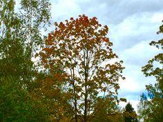 А за окном гуляла осень, Сияя, в красно-золотом! Где облаков, седая проседь, На небе светло-голубом...  Писала яркие картины, Росой сияньем, по утрам... Добавив, будто для витрины, В наш Мир, неповторимый шарм!  С листвой, кружащей хороводы, Сменив наряд на серость дней, Небес утяжеливши своды, Прольёт унылость из дождей...  И берегов скрывая тени, Туманом, уж с остывших рек, Откроет снова осень сени, Зиме, впустив с морозом - снег...  p.s. Фото моего сына.  #стихи #Долгопрудный #поэзия…