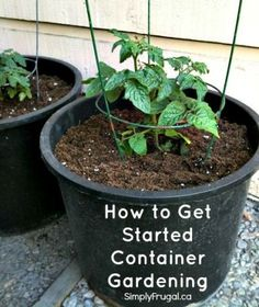 How to get started container gardening! Great DIY Guide to give you an idea of how to start this at home