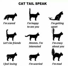 Quote of the day - French proverb - Cats/Katzen/Chats/Gatos - Chat Cool Cats, I Love Cats, Crazy Cats, Gatos Cool, Akita Dog, Cat Behavior, All About Cats, Fun Facts About Cats, Cat Facts