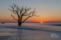 Another shot from 3/10/14 at Botany Bay, Edisto Island, SC