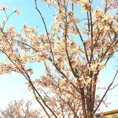 Spring of river