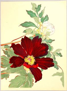 wonderlartcafe: Artist: attributed to Tanigami Konan, Title: Peonies, Date: Ca. Vintage Botanical Prints, Botanical Drawings, Botanical Art, Art Floral, Illustration Botanique, Illustration Blume, Japanese Art Styles, Impressions Botaniques, Amarillis
