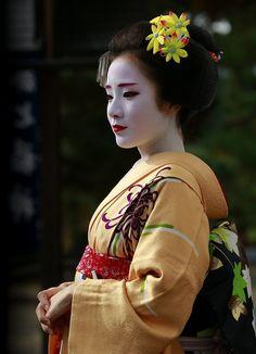 kimono mainichi — floating-flowers:   November with maiko Chiyoko...