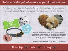 Importance of a Micro-chip, Collar & Tag