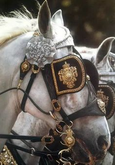 The most important role of equestrian clothing is for security Although horses can be trained they can be unforeseeable when provoked. Riders are susceptible while riding and handling horses, espec… Pretty Horses, Horse Love, Beautiful Horses, Foto Portrait, Princess Aesthetic, Clydesdale, Draft Horses, Horse Tack, Gypsy Horse