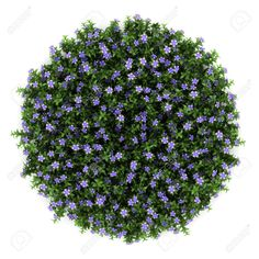 top view flower png - Google Search